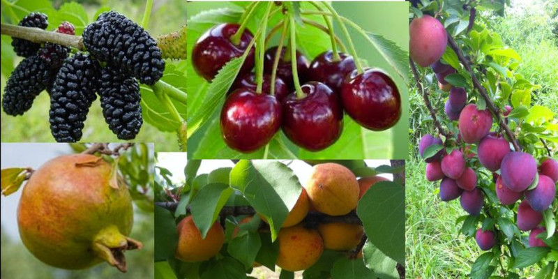 Food_Forest_2021